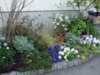 自宅の庭と春の花 - milfle なブーケ