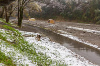春の雪 - デジカメ写真集