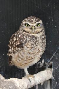 大宮公園小動物園~リス・キジ舎の多彩な鳥たち(July 2018) - 続々・動物園ありマス。