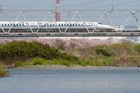 眼下を流れる川は穏やかに② - 新幹線の写真