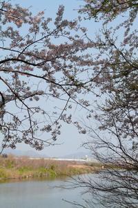 眼下を流れる川は穏やかに① - 新幹線の写真