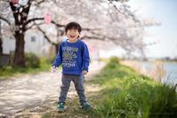 古利根川の桜 - Full of LIFE