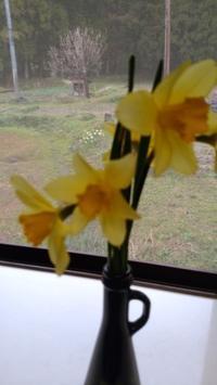 春は、花盛りです。 - BluemounCoffee わたし日記