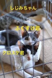 にゃんこ劇場「ふくすけ物語」 - ゆきなそう  猫とガーデニングの日記