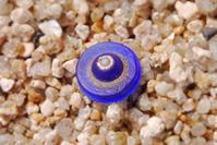 海ボタン一歩手前 - Beachcomber's Logbook