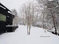 雪 と マンサク - 永楽屋ガーデン    自然を愛する スローライフな庭造り
