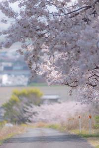 SAKUA*咲く道 - 気ままにお散歩