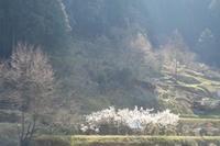 山里の春 - feel a season