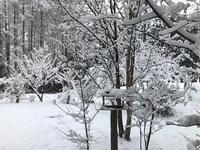 四月の雪 - 風路のこぶちさわ日記