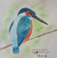 #野鳥スケッチ #ネイチャー・ジャーナル 『翡翠』Alcedo atthis - スケッチ感察ノート (Nature journal)