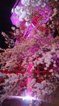 念願の夜桜見物 - Nature Care