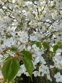 2019年4月の予定 - アロマセラピストMakiのブログ 秋谷シーサイド日記