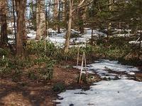 ようやくの雪解け - 北緯44度の雑記帳