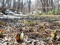 春をさがしに - こもれびの森