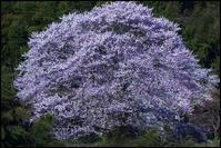 「阿武隈物語・・・咲き誇る」 - 花のこみち