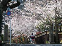 春色の鎌倉その4(光則寺〜七里ガ浜) - 風任せ自由人