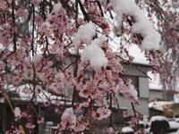 4月の雪 - 八ヶ岳 革 ときどき くるみ