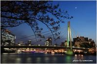 大川のさくらと夜景Ⅰ - 今日のいちまい
