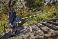 ★『Sakura Steps(カヨウヒト@桑名春)』 - 一写入魂