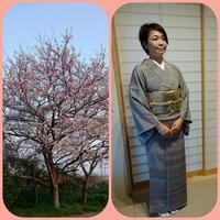 桜ひらひら嬉しい入学式♪ - 山口下関市の着付け教室*出張着付け    はまゆうスタイル