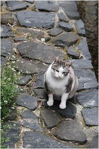 さくら猫 - HIGEMASA's Moody Photo