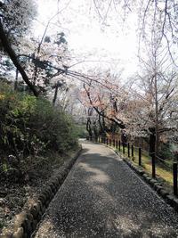 ある風景:Shinohara park, Yokohama@Spring - MusicArena