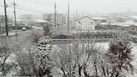 季節外れの雪です - もの作りの裏側 太陽電機株式会社ブログ