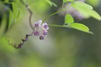 馥郁たる香り - ecocoro日和