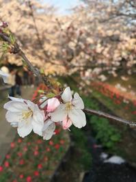 江川せせらぎ緑道2019 - うひひなまいにち