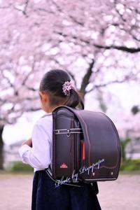 圧倒的桜・平成FINALへ・・・2019 - Photo千思万考2