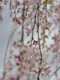 春の花と戯れて! - 風の吹くまま