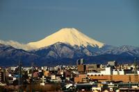 今朝の富士山 - お散歩写真     O-edo line