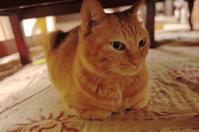 「猫のペシペシも爪切りしたら痛くない」 - もるとゆらじお