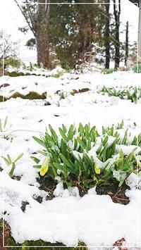 4月なのにまた雪?手入れ前の庭! - 十色記