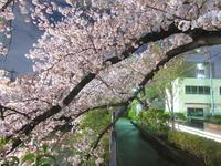ちょっと寄り道・ゆく春を惜しみ - 神奈川徒歩々旅