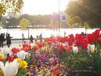 九州#47:福岡城跡公園(舞鶴公園)2。 - Precious*恋するカメラ
