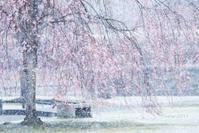 矢板雪降る公園でブロガーさんとの撮影会 in 長峰公園 - 日々の贈り物(私の宇都宮生活)