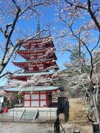さくら富士山-2 - NPHPブログ版