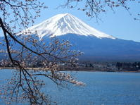 さくら富士山-3 - NPHPブログ版