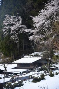 桜と雪。 - 移動探査基地