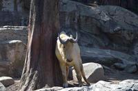 キンタツー - 動物園へ行こう