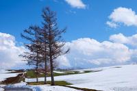 春の景色と雪景色のマイルドセブンの丘VOL.2~4月の美瑛 - My favorite ~Diary 3~