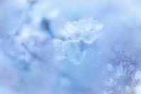 お花見 - Photo Terrace