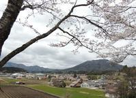 大朝、もうじき満開の桜と、ウグイス。 - 大朝=水のふる里から