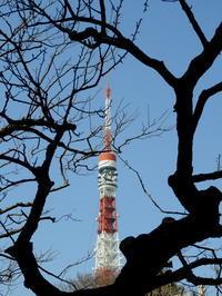 東京そぞろ歩き・1月の東京:増上寺&東京タワー - 日本庭園的生活