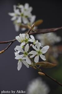 本日のお花♪ - Blanc de Blancs