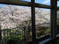 まだまだ満開 - 手柄山温室植物園ブログ 『山の上から花だより』