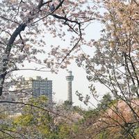 2019年4月第2週コーディネート① - ケチケチ贅沢日記
