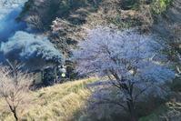 SLやまぐち号Vol.145 桜・その2(2019/04/06) - まるさん徒歩PHOTO 4:SLやまぐち号・山風景など…。 (2018.10.9~)
