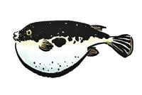 FUGU ! - FOOD GEEK Japarisienne